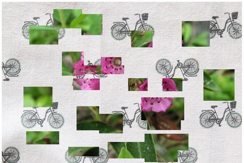 Petit Arbuste de Martine 8/05 trouvé par Snoopie Plante17