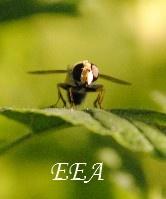 créer un forum : UNIVERS ET LUMIERE  Eea10