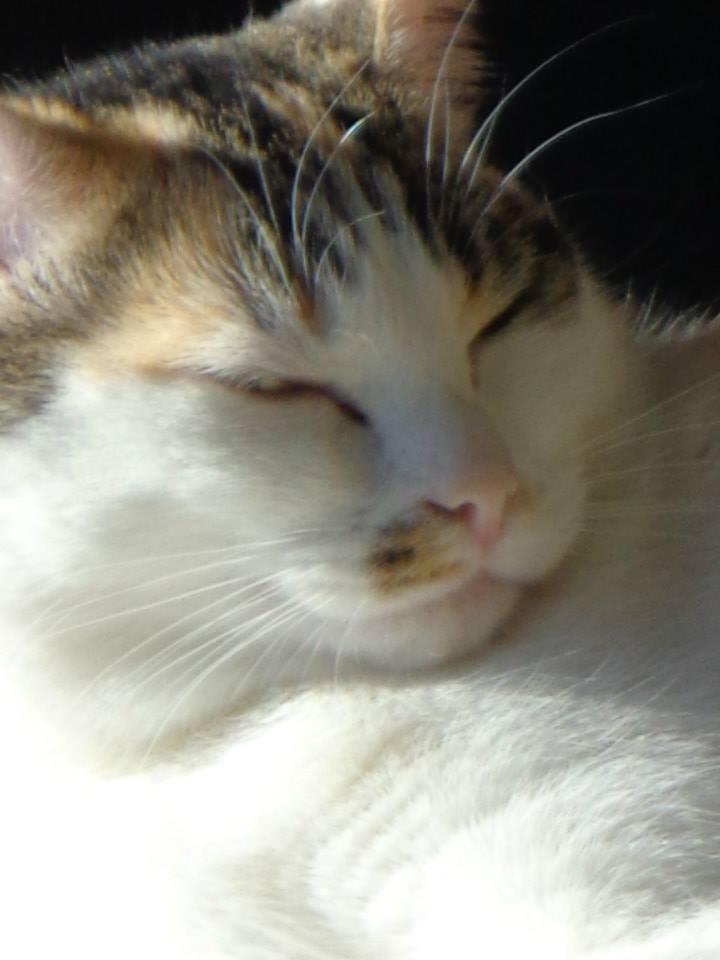 Iroise, femelle type européenne, tricolore, née 1er mai 2013 - Page 5 10115910