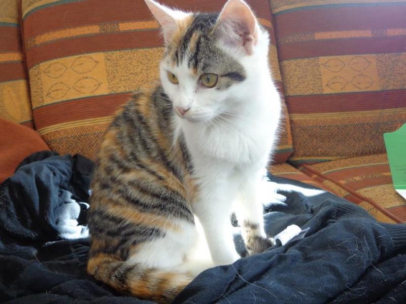 Iroise, femelle type européenne, tricolore, née 1er mai 2013 - Page 4 13823710