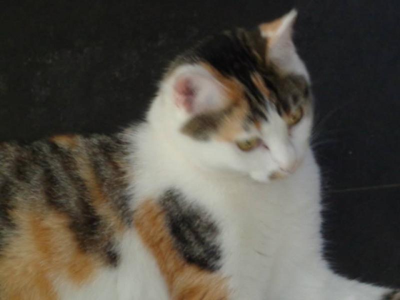 Iroise, femelle type européenne, tricolore, née 1er mai 2013 - Page 5 16097910