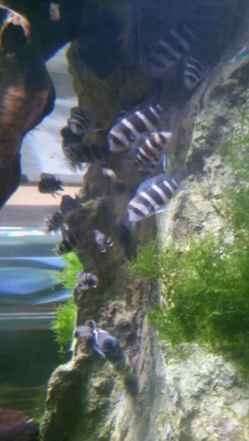 Visite de l'aquarium d'Amnéville du Dimanche 16 Avril 2017 06010