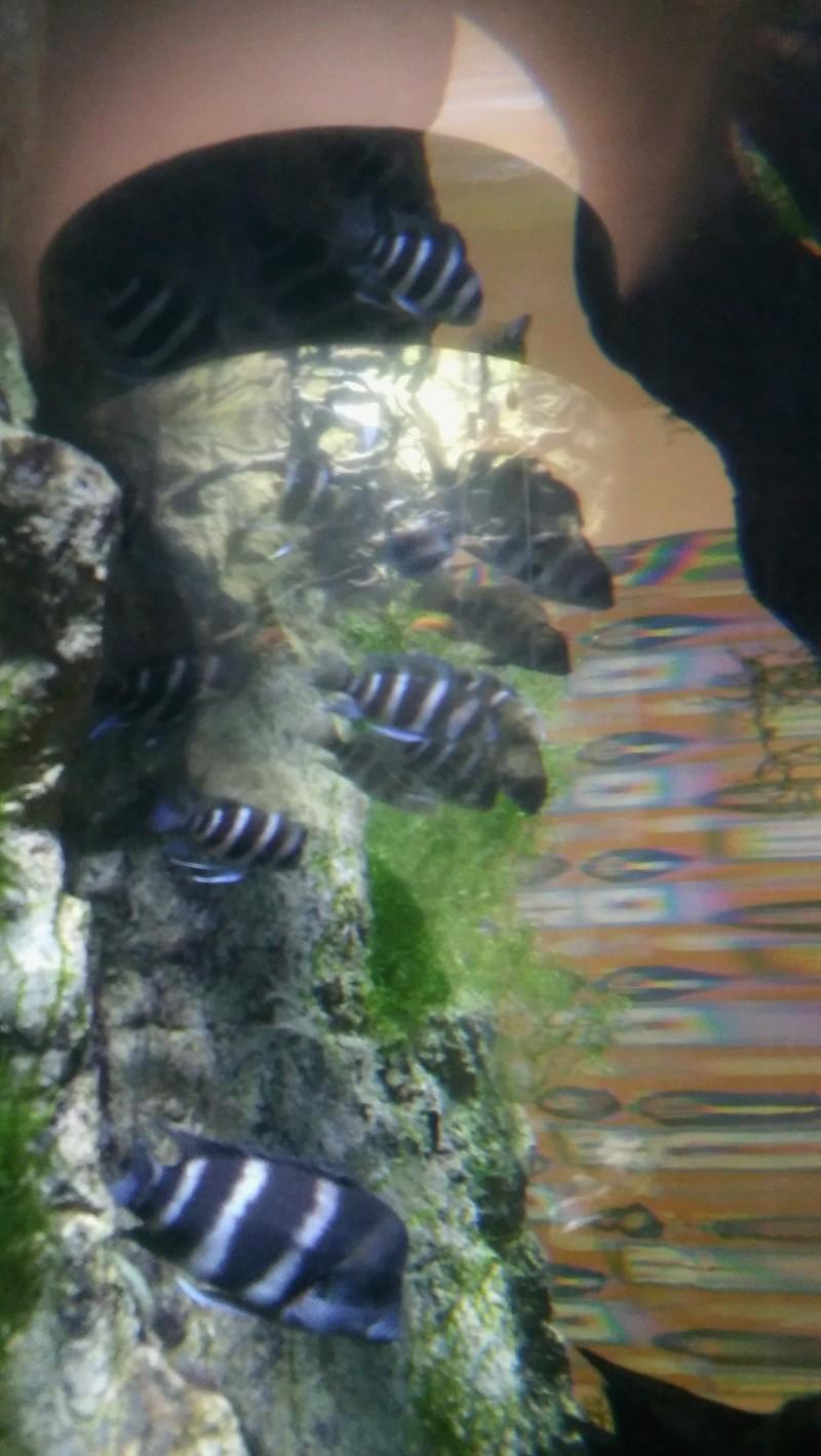 Visite de l'aquarium d'Amnéville du Dimanche 16 Avril 2017 06210