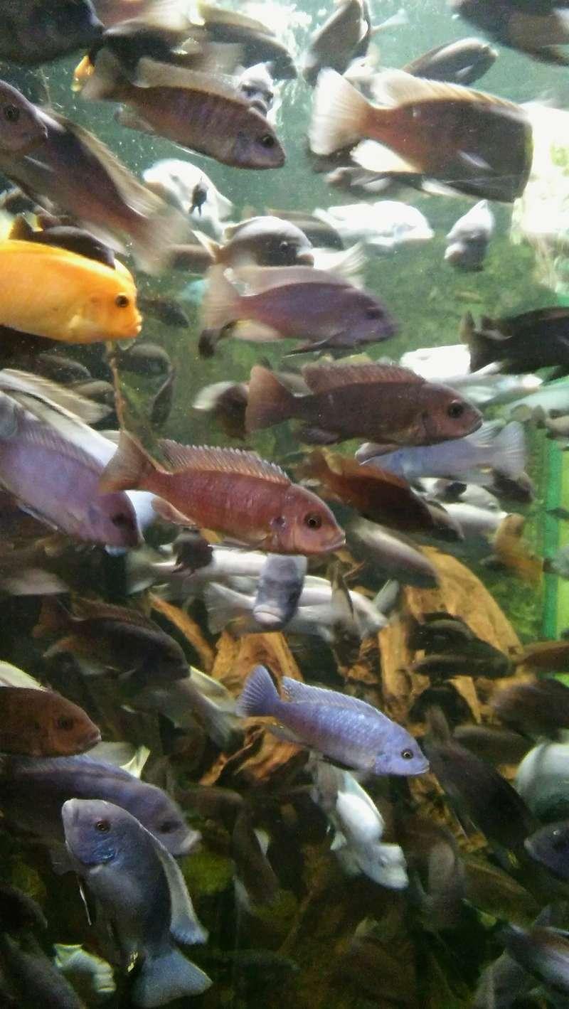 Visite de l'aquarium d'Amnéville du Dimanche 16 Avril 2017 06810