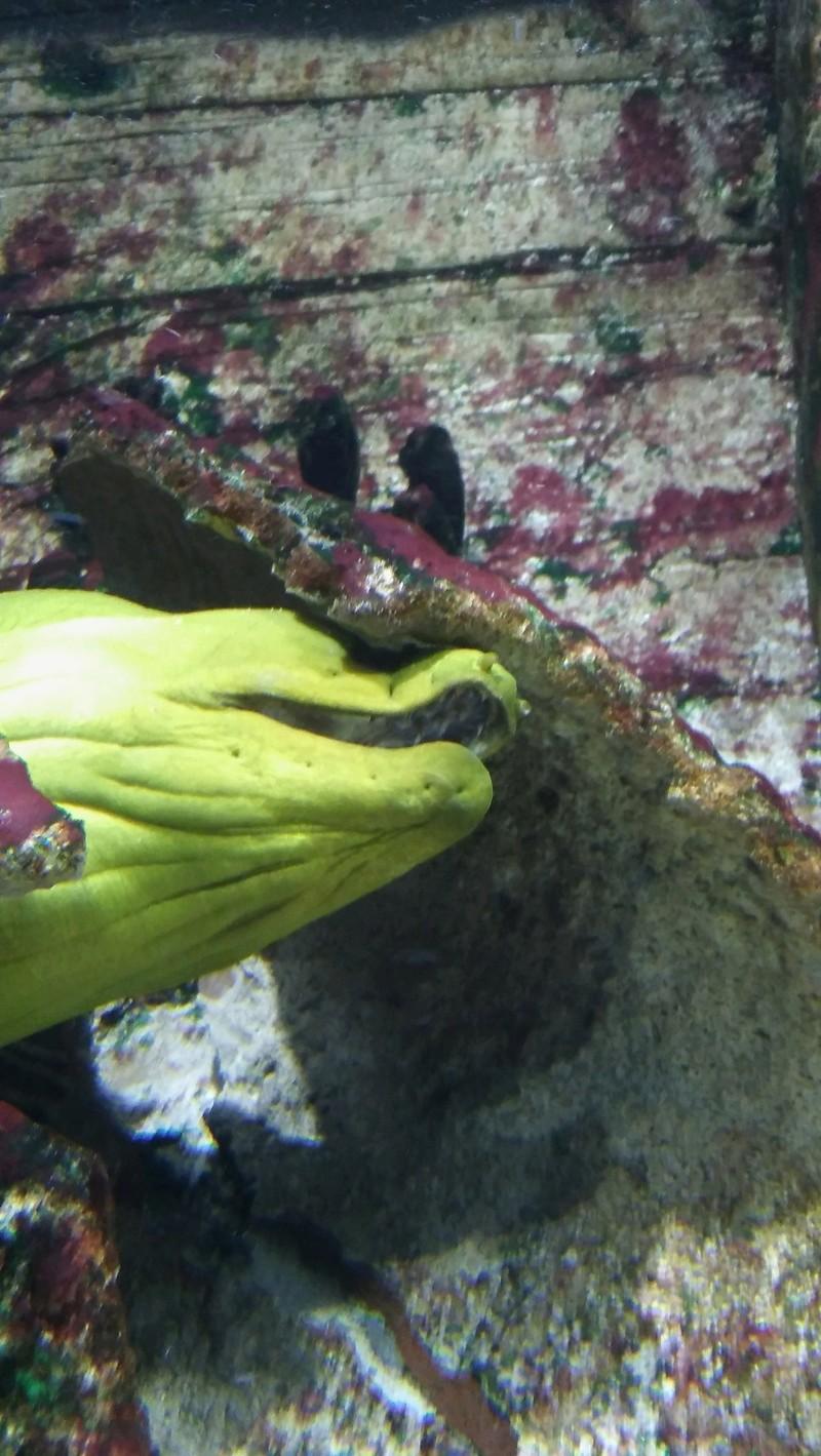 Visite de l'aquarium d'Amnéville du Dimanche 16 Avril 2017 07310