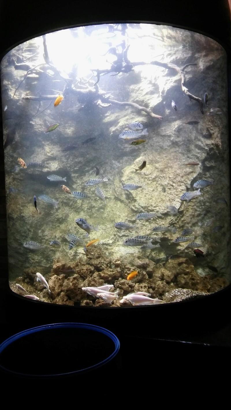 Visite de l'aquarium d'Amnéville du Dimanche 16 Avril 2017 14110