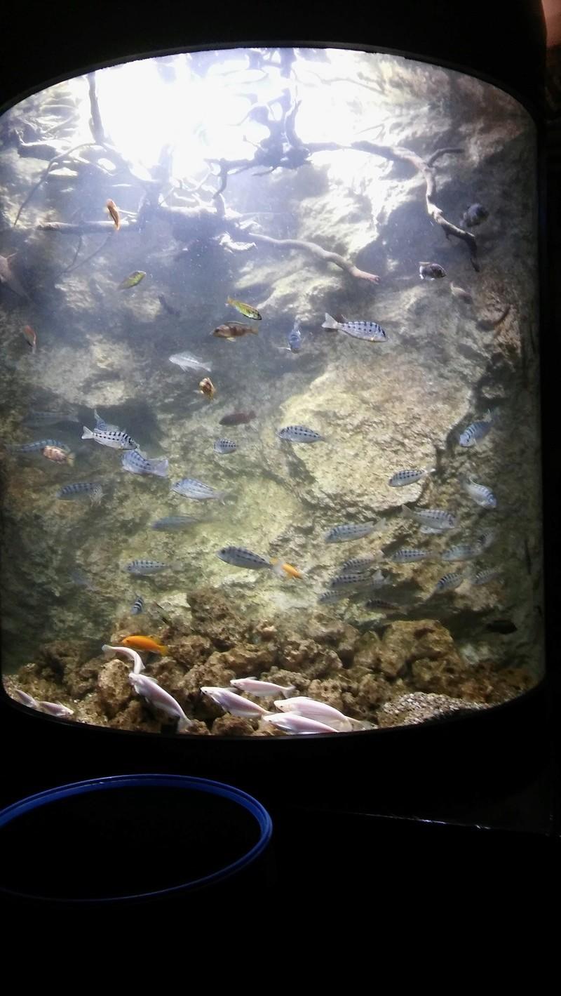 Visite de l'aquarium d'Amnéville du Dimanche 16 Avril 2017 14210