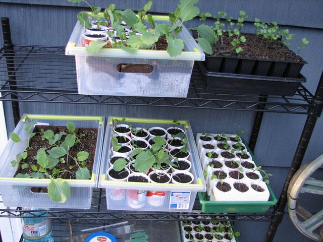 Big Lots Greenhouse Mornin10