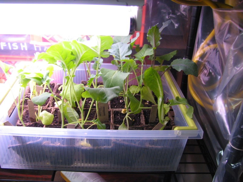Starting seeds Newest10