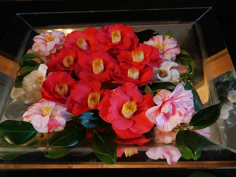 Camellia - Kamelien - Seite 2 P1000621