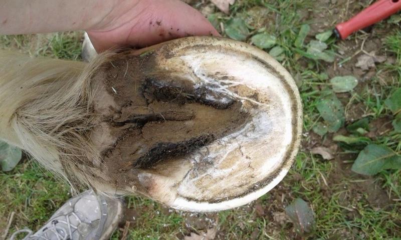 Nos pieds-nus en photos - avis et conseils.  17379710