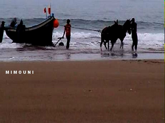 plage - Tafedna, une plage rural au Sud d'Essaouira Tafedn11