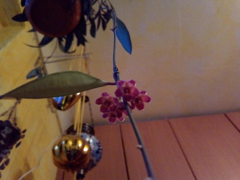 Pflanzen aus dem Baumarkt 5209_i10