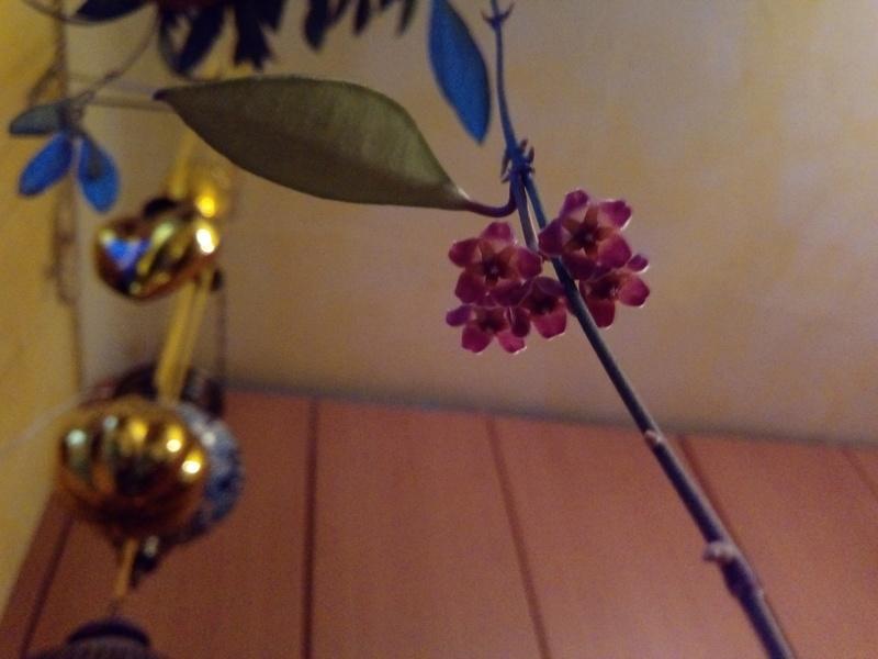 Pflanzen aus dem Baumarkt 5210_i10