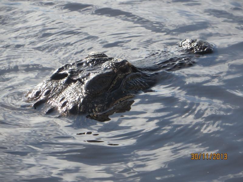 [FLORIDA 2013] 3 semaines magiques en Floride Img_0216