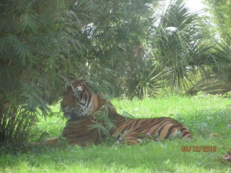 [FLORIDA 2013] 3 semaines magiques en Floride - Page 3 Img_1525