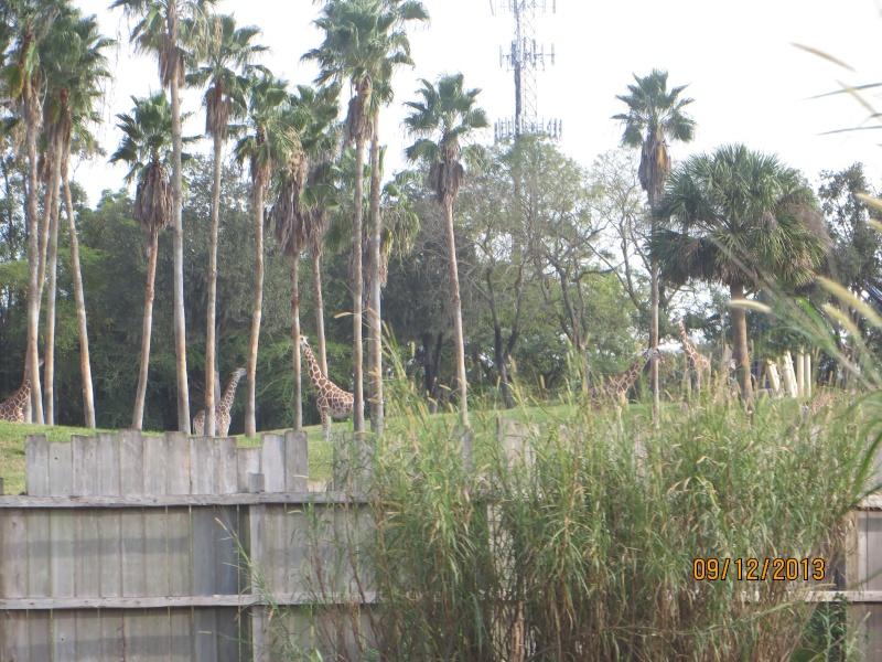 [FLORIDA 2013] 3 semaines magiques en Floride - Page 5 Img_2510
