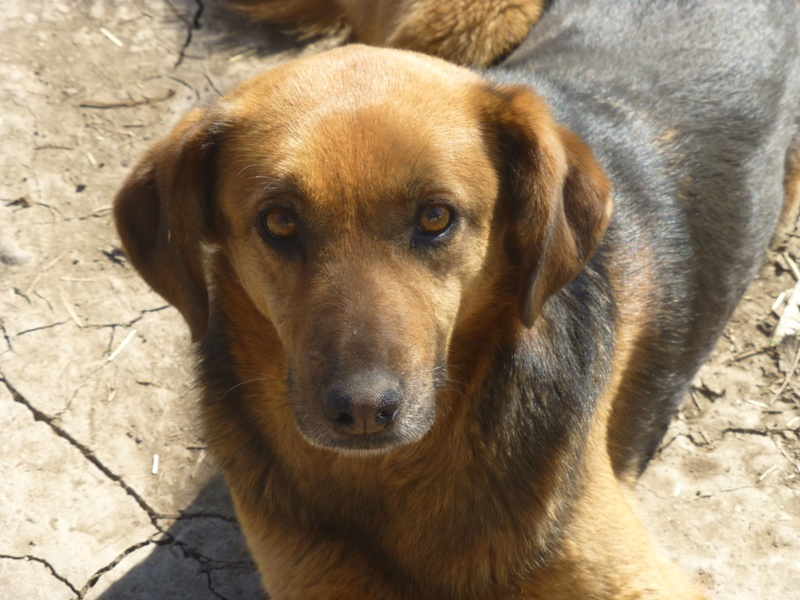 JELLY (ex JERRY) F-X, taille moyenne, env. 20 kg, née 2011 (BACKA) - Prise en charge SPA Pontarlier Jerry_10