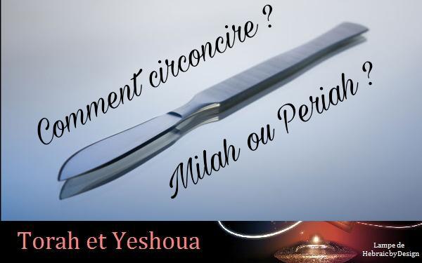 Comment circoncire? Milah ou Periah? Picsar15