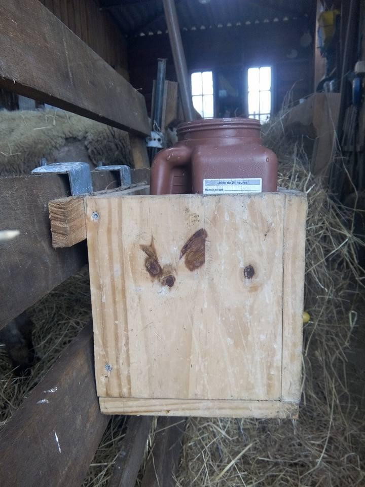 Installation de la louve et allaitement en nombre 17201310