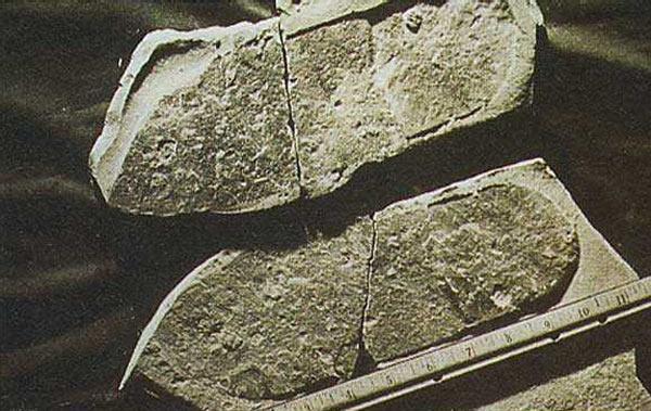 La plus vieille empreinte du monde ? Emprei11