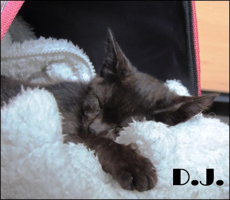 CALINOU (DJ) Dodo110