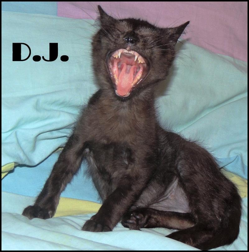 CALINOU (DJ) Grrrrr10