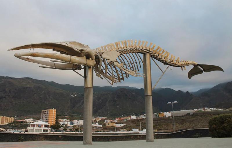 Squelette de baleine - Santa cruz de Ténérife - Espagne 10873910