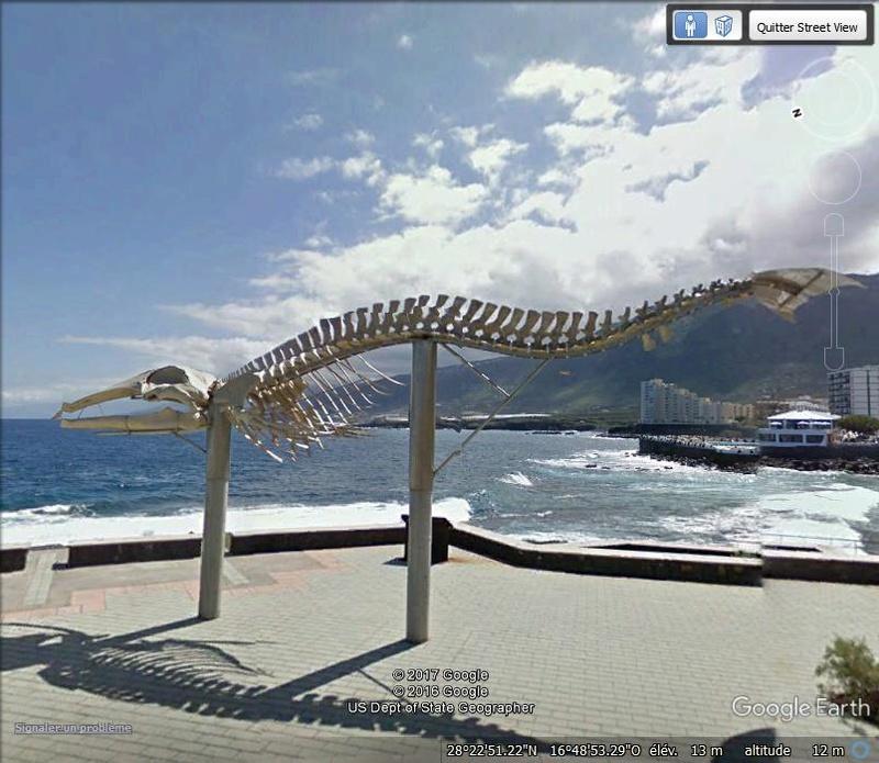 Squelette de baleine - Santa cruz de Ténérife - Espagne Aaaaa12