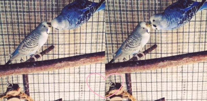Mutation de ma femelle svp - Page 2 Lamour10