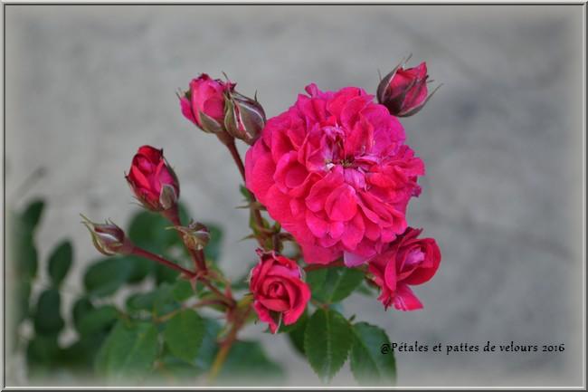 Crimson Winter Jewel 01112