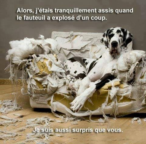 Oups !  Chien_10