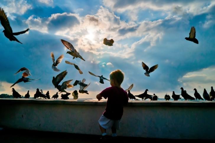 mon bébé d'amour guillaume - Page 4 Pigeon10