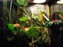 grand gecko de madagascar HELP ! Imgp6220