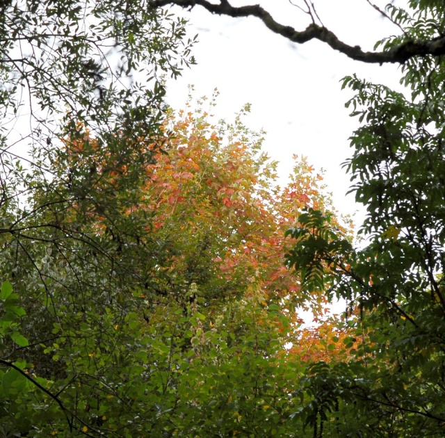 scènes d'automne - saison 2013 Dsc_0011