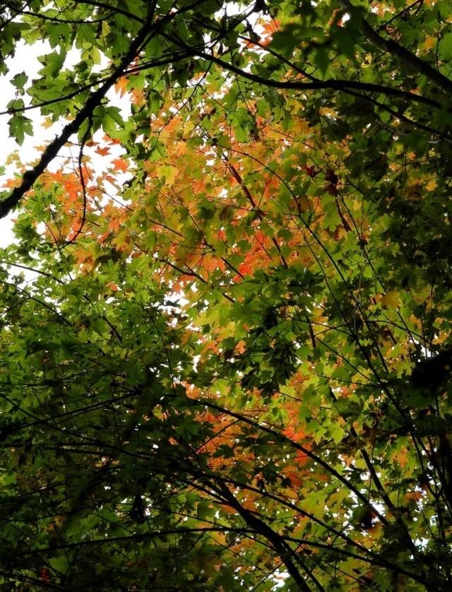 scènes d'automne - saison 2013 Dsc_0012