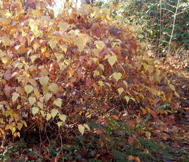 scènes d'automne - saison 2013 - Page 10 Stepha10