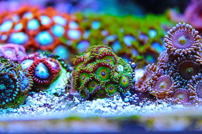 Mon 450L Reef - Page 2 Img_2110