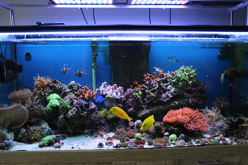 Mon 450L Reef - Page 2 Img_2313