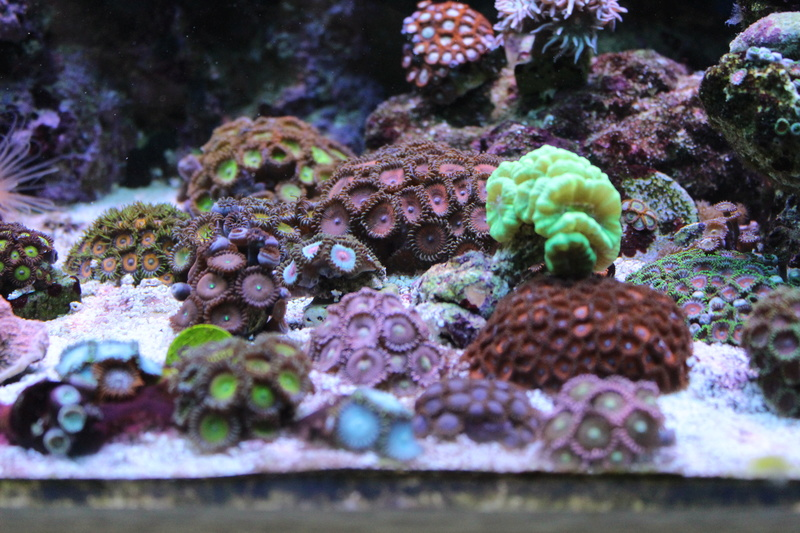 Mon 450L Reef - Page 2 Img_2410