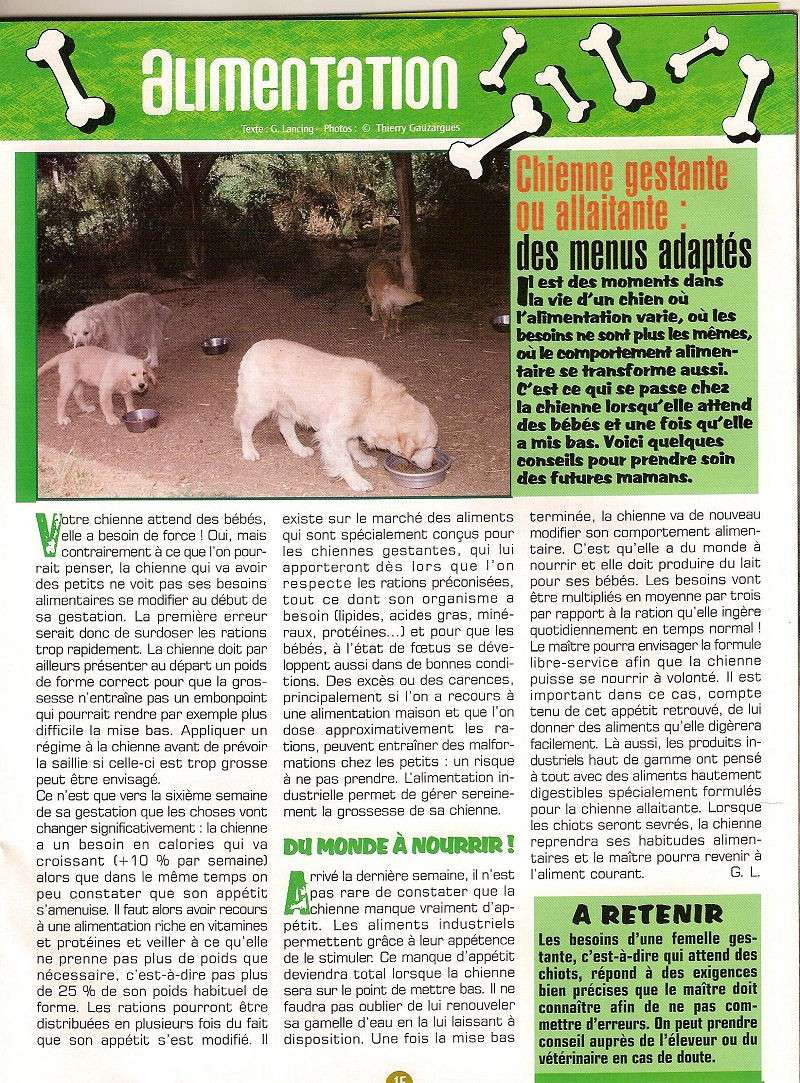 Alimentation chiot et chienne gestante-allaitante ,lab mag 2004-05 5c-ali10