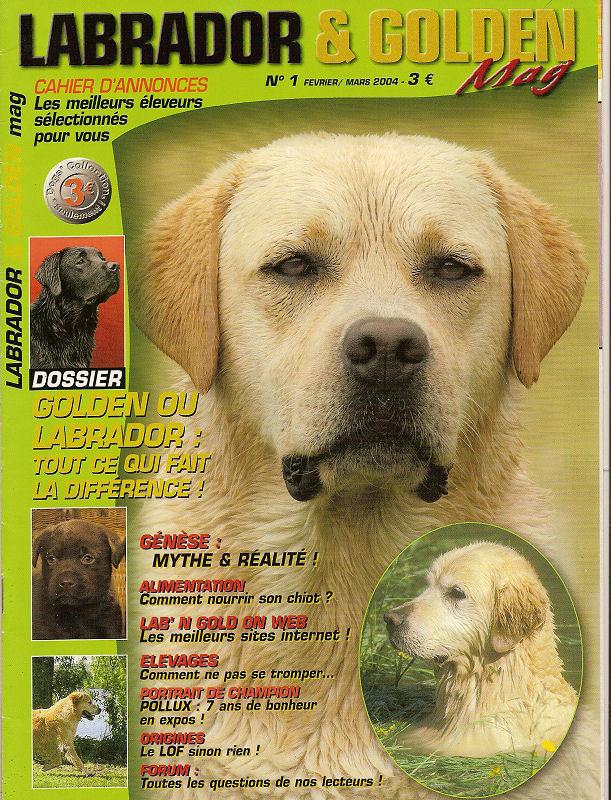 Labrador Golden Mag Labs_010
