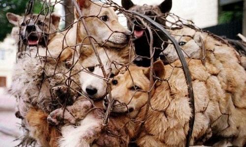 Chaîne de solidarité clic animaux - Page 21 Petiti10