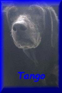 FERMETURE REFUGE DE BACKA   - Page 8 Tango10