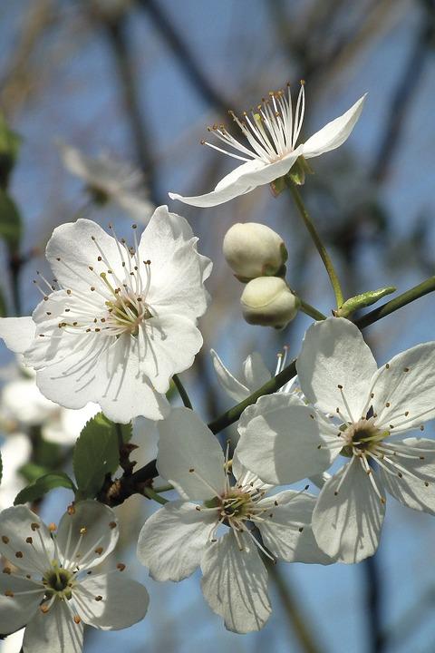 bonzour bonne zournée et bonne nuit notre ti nid za nous - Page 37 Flower10