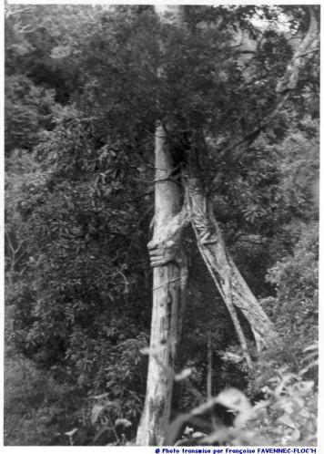 [ARCHIVÉ] [Campagne] DIÉGO SUAREZ - TOME 015 - Page 20 _photo11