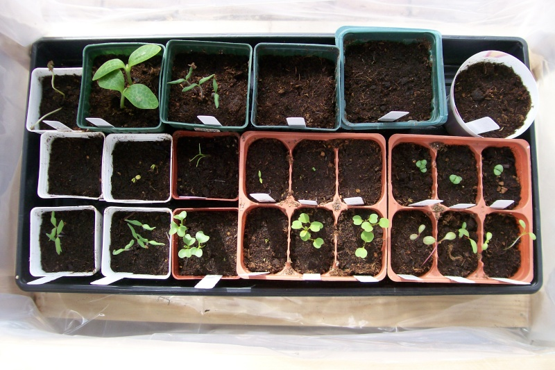 Central California: Just planted my winter garden starts yesterday 3-2-1310