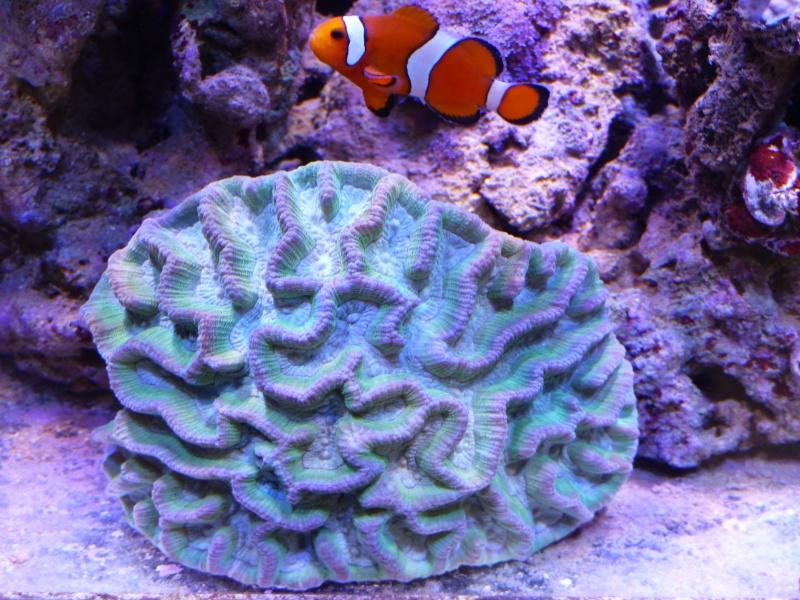 Mon nouveau reef de 830L - Page 3 P1000010