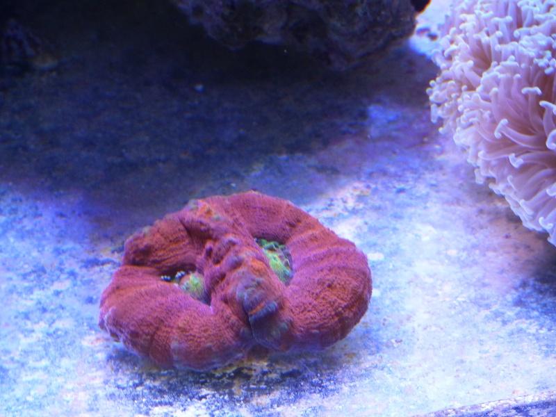 Mon nouveau reef de 830L - Page 3 P1000015