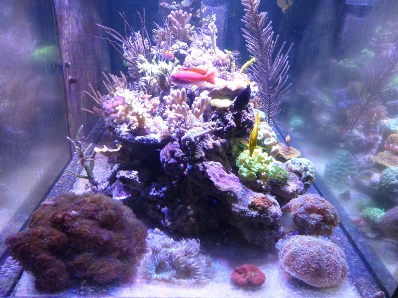 Mon nouveau reef de 830L - Page 3 P1000016